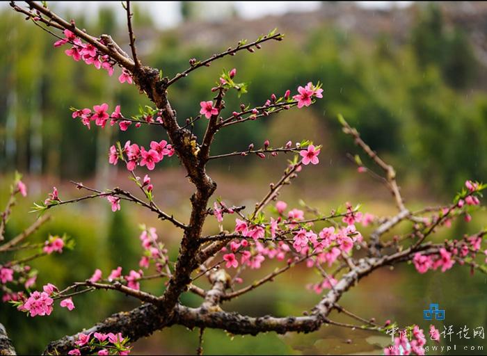 花开花落时作文_彼岸花开花不见叶叶不见花