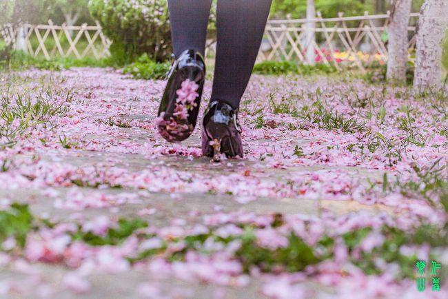 花开花落的瞬间作文_日轮花什么时候开花