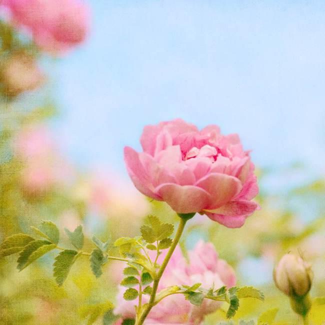 人生花开花落作文_为什么仙丹花不开花_如意黄后花开花照片